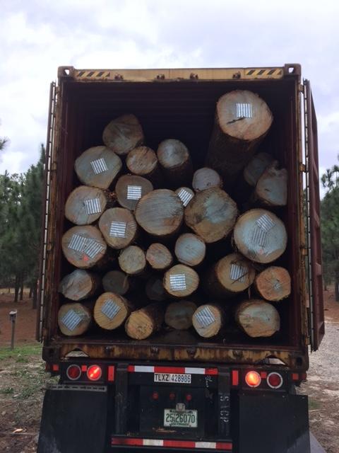 Ash logs 2