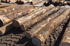 Ash logs 1