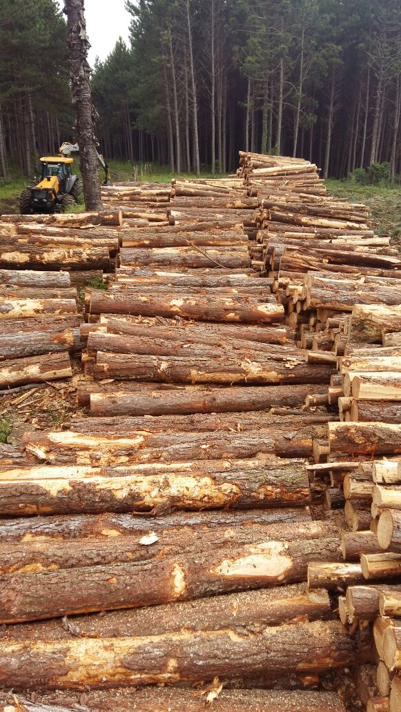 Raw Logs
